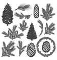 vintage coniferous tree elements set vector image