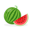 watermelon and juicy watermelon slice vector image