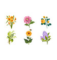 beautiful flowers set daffodil lily the vector image vector image