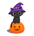 Black cat in a witch hat on a halloween pumpkin