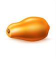 realistic 3d papaya pawpaw isolated vector image vector image