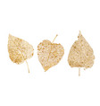 set of golden leaves skeletons fallen foliage for vector image