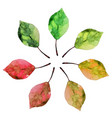 watercolor set leaves of the tree vector image