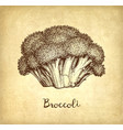 ink sketch of broccoli vector image vector image
