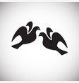pigeons in love on white background vector image