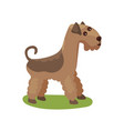 airedale dog purebred pet animal standing on vector image vector image