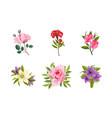 beautiful flowers set rose lily rosehip peony vector image