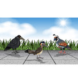 Different wild birds on the street vector image vector image