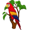 Funnny Parrot vector image vector image