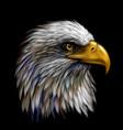 graphic color portrait a eagle on a black bac vector image
