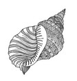 seashell isolated marine life background summer vector image