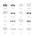 Seed Icon Set vector image vector image