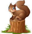 cute squirrel cartoon standing on tree stump vector image vector image