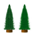 green christmas trees in a flowerbed realistic vector image