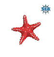 red starfish on white background isolated drawing vector image vector image