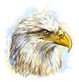 sketchy hand-drawn color portrait a eagle vector image
