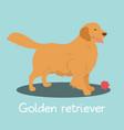 an depicting golden retriever dog cartoon vector image vector image