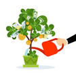 money tree care vector image vector image