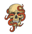 octopus in human skull color sketch vector image vector image