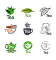 set logo tea vector image vector image