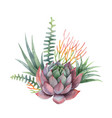 watercolor bouquet of cacti and succulent vector image vector image