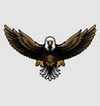 american bald eagle with open wings and claws vector image vector image
