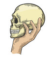 human skull in hand sketch engraving vector image