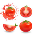 tomatoes isolated realistic vector image vector image
