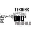 why own a norfolk terrier dog as pet text word vector image vector image