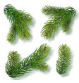 christmas tree branches set for a christmas decor vector image vector image