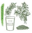 marjoram spice and herbal seasonings sketch herbs vector image vector image