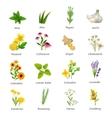 Medicinal Herbs Plants Flat Icons Set vector image