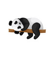adorable little panda lying on brown branch vector image vector image