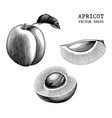 apricot collection hand draw vintage clip art vector image vector image