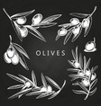hand drawn olive branches on chalkboard vector image vector image