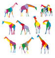 set colorful silhouettes giraffes vector image
