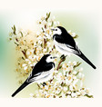 couple of black and white birds sit on branch vector image