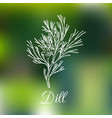 dill on blurred background vector image