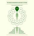 endocannabinoid and body systems infographic vector image vector image