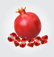 ripe pomegranate fruit and pomegranate seeds vector image vector image