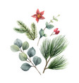 watercolor christmas arrangement with fir vector image vector image
