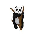 adorable fluffy panda sitting on brown tree branch vector image