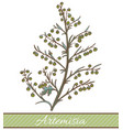 colored artemisia plant in hand drawn style vector image vector image