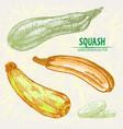 digital detailed line art color squash vector image