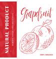 fruit element of grapefruit hand drawn vector image
