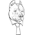 draw in black and white pitbull head with vector image