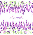 lavender flowers seamless pattern watercolor vector image vector image