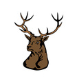 Stag Head vector image vector image