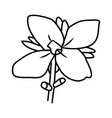 canna flower floral hand drawn design sign vector image vector image