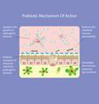 prebiotic mechanism of action vector image vector image